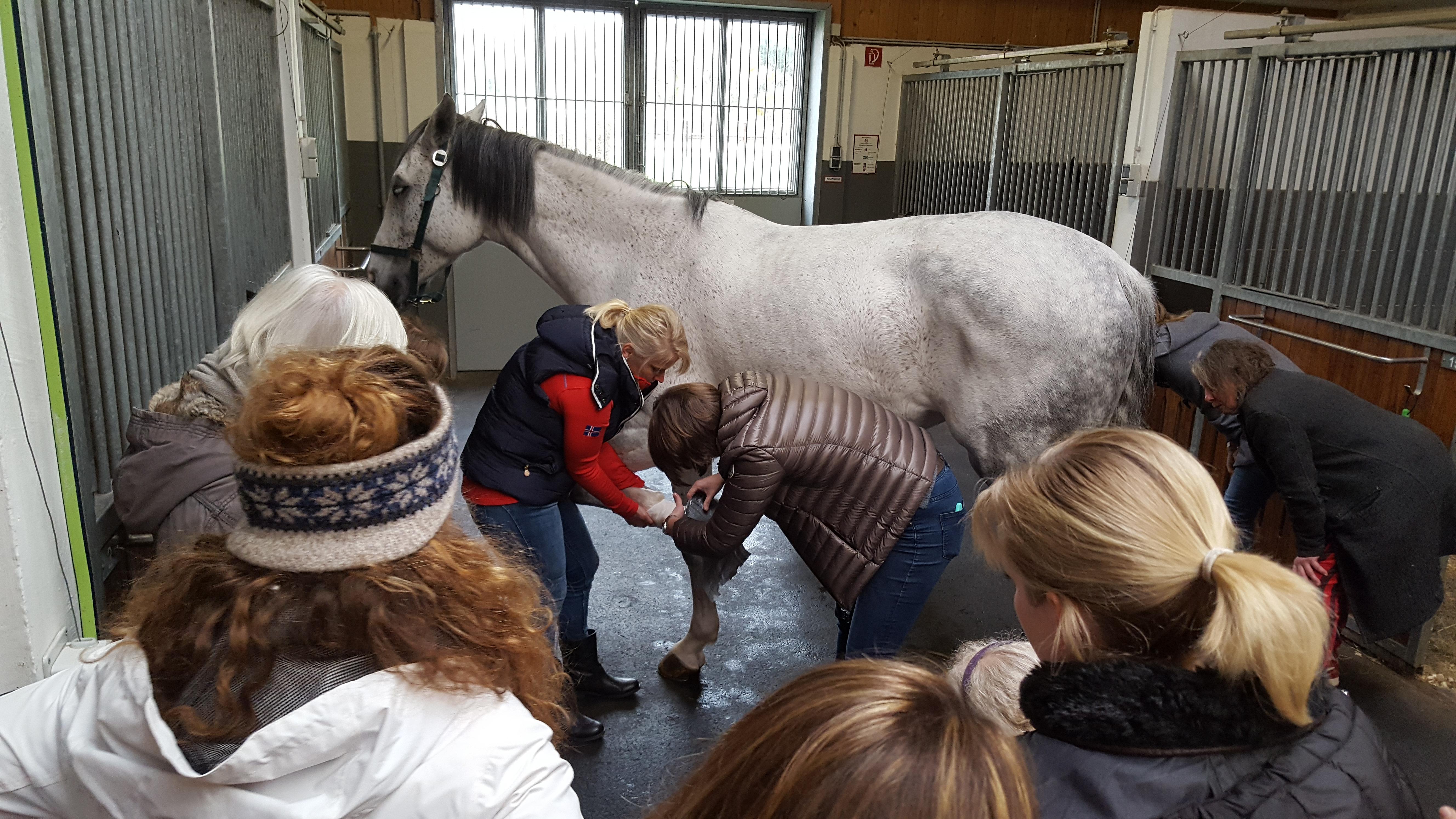 1. Hilfe Kurs in der Pferdeklinik Leichlingen